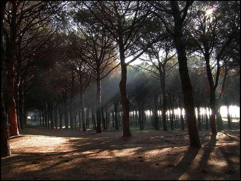 pineia3jpg.jpg