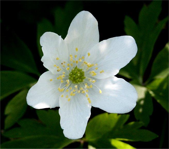 fiore2.jpg