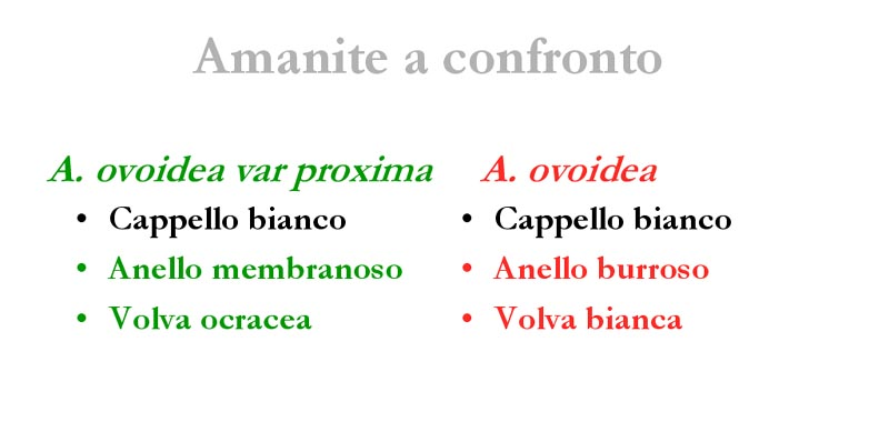 Confronto_2.jpg
