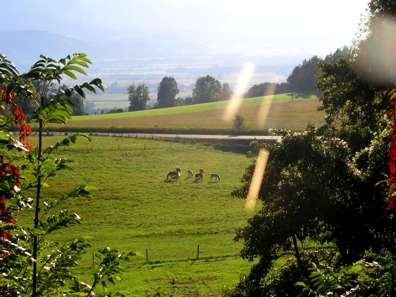 Panorama_cavalli.jpg