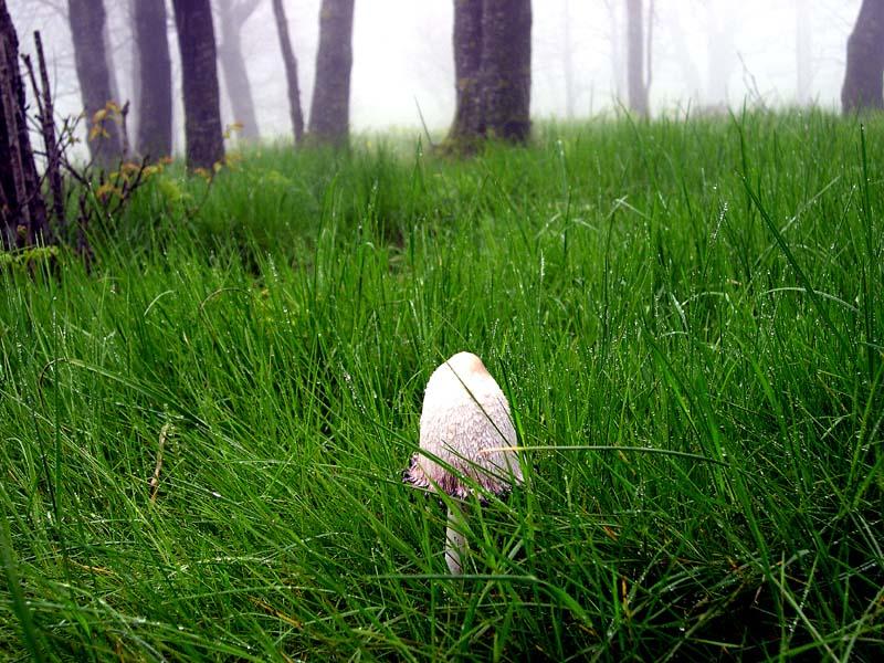 Floresta_039.jpg