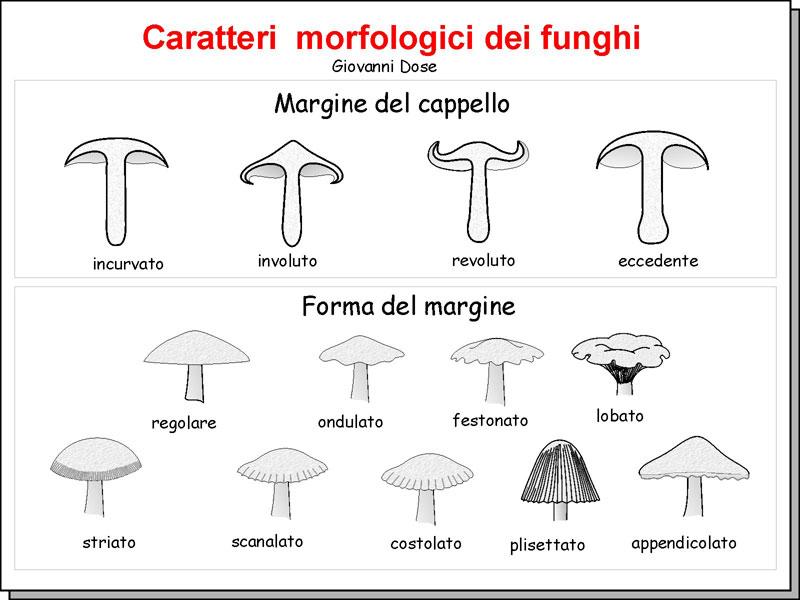 Morfologia_06.jpg