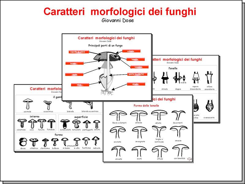 Morfologia_01.jpg