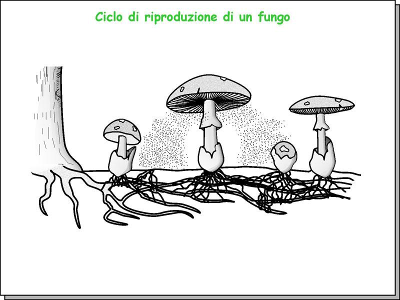 Morfologia_12.jpg