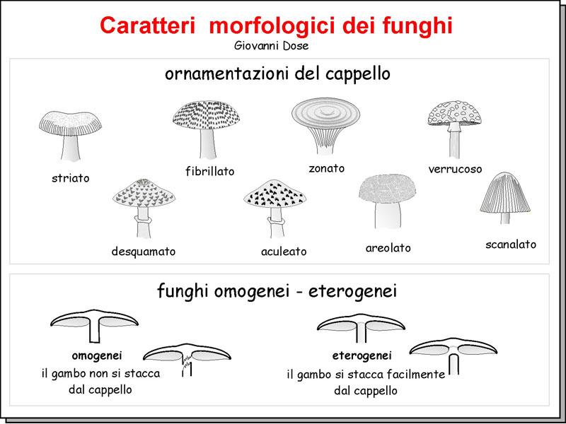 Morfologia_05.jpg