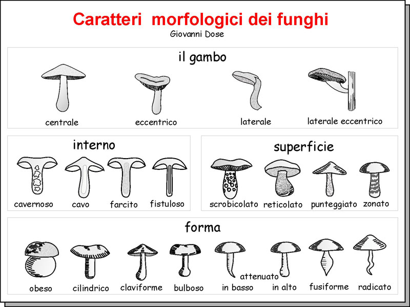 Morfologia_08.jpg