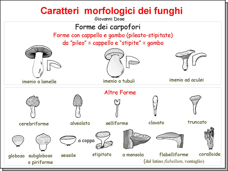 Morfologia_03.jpg