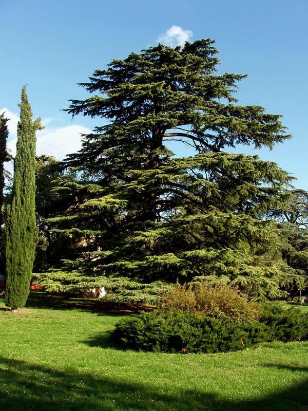 parco_villa_Cozza_1.jpg