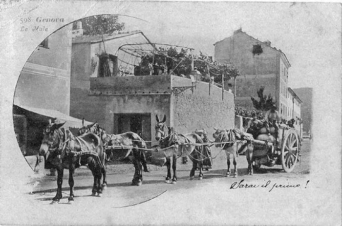 Le mule.jpg