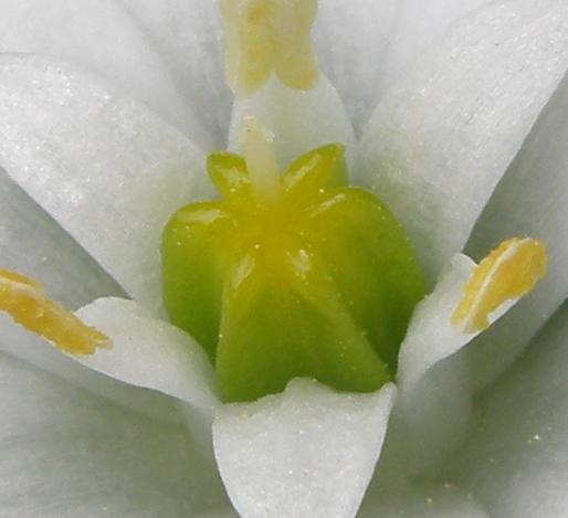 particolare_fiore.bianco.JPG