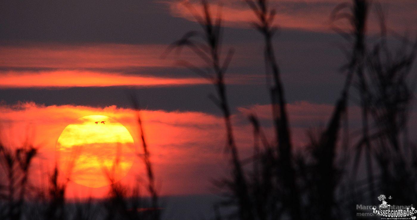 anatre al tramonto
