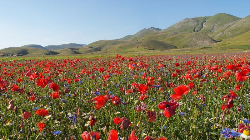 La fiorita - Castelluccio di Norcia (PG)